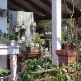 Blumen Laupitz - Das Geschäft 2