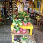 Blumen Laupitz - Das Geschäft
